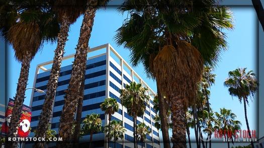 Pre-Solstice Palms