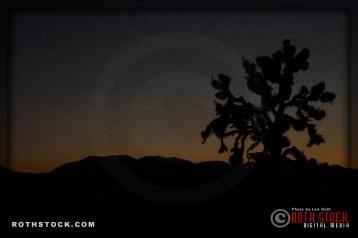 Joshua Tree at Dusk