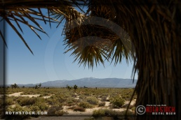 Views of Joshua Trees and the San Gabriel Mountains.