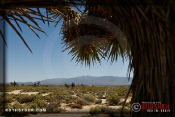 Views of Joshua Trees and the San Gabriel Mountains.
