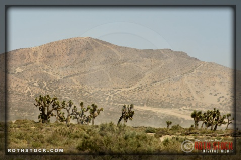 Views of Joshua Trees as seen from Victor Valley in the Mojave Desert